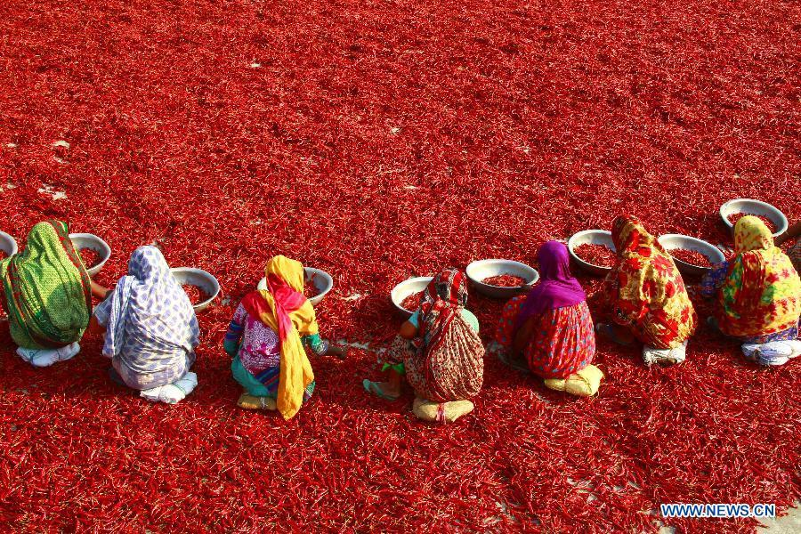 Women dry chilies at a factory in Bogra district, Bangladesh, March 23, 2019. China will hold the Conference on Dialogue of Asian Civilizations starting from May 15. Under the theme of \