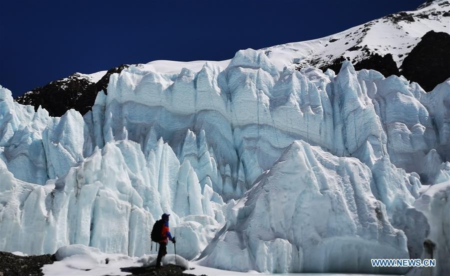 A climber is seen in front of a glacier on Mount Qomolangma in southwest China\'s Tibet Autonomous Region, April 26, 2019. Every year, for a few weeks, hundreds of climbers and supporting personnel come to the base camp of the northern face of Mount Qomolangma, trying to reach the summit of the tallest and most famous mountain in the world. Before starting climbing, they need to hike several times between elevations from 5,000 meters to 7,000 meters, giving their bodies some time to adapt. When this process is over, it\'s all up to the weather. The base camp is a popular place to wait for the window. Among the six camps on the northern face, the base camp at an altitude of 5,200 meters is the furthest cars can reach and therefor the most equipped. Besides food and accommodation, climbers can also enjoy tea and massage. They can also play football on perhaps the highest field. There\'s even a simple gym in the camp. Environmental protection is a priority here. Garbage sacks are given to each climbing team. Special containers are put in every camp to collect trash and sewage. The collected trash must be treated 100 kilometers away, and the only road is a zigzagging track. It is not trucks, but yaks that are generally used to make the journey. Actually yaks are vital on the mountain. Beyond the base camp, yak is the only reliable transport. (Xinhua/Zhaxi Tsering)