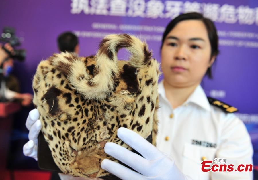 An officer shows a leopard fur product seized by Hangzhou Customs before the handover to forestry authorities in Hangzhou City, East China\'s Zhejiang Province, May 14, 2019. Hangzhou Customs showcased endangered species and wildlife products weighing 863.69 kilograms.