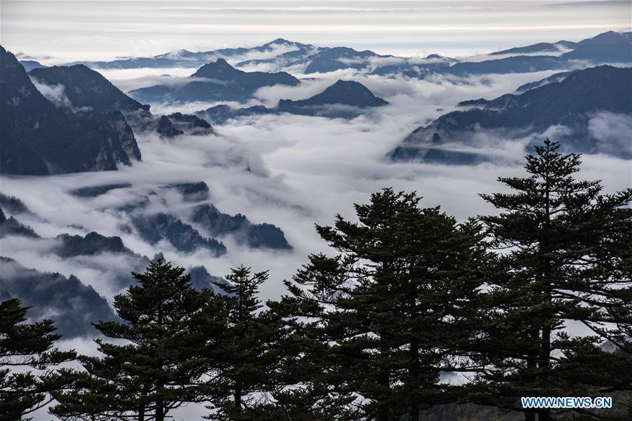 Photo taken on Oct. 20, 2018 shows the scenery of cloud sea at Shennongjia National Park in central China\'s Hubei Province. (Xinhua/Du Huaju)