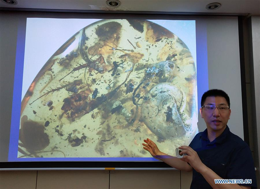 Wang Bo, a researcher with the Nanjing Institute of Geology and Palaeontology of the Chinese Academy of Sciences (NIGPAS), demonstrates a picture of the first known amber encasing an ancient sea animal called ammonite during a press conference in Nanjing, east China\'s Jiangsu Province, May 14, 2019. An international group led by Chinese scientists identified the first known amber encasing an ancient sea animal called ammonite about 100 million years ago. The study published on Monday in the Proceedings of the National Academy of Sciences described the 6.08 gram amber, which is 33 mm long, 9.5 mm wide and 29 mm high. The discovery provided a clue to ancient coastal forest ecology. (Xinhua/Sun Can)