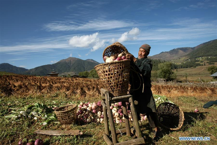 Photo taken by Sangay Tenzin shows a farmer pouring radishes into a basket in Bhutan. This photo is displayed in a photographic exhibition themed \