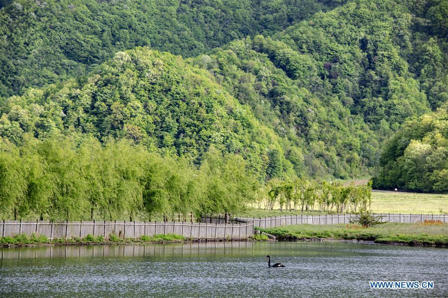 Photo taken on May 16, 2019 shows the scenery of Dajiu Lake (nine lakes) wetland in Shennongjia, central China\'s Hubei Province. (Xinhua/Liu Lianfen)