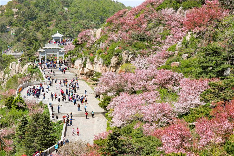 Crabapple flowers have attracted flocks of tourists to Taishan Mountain.  (Photo by Sui Xiang for chinadaily.com.cn)