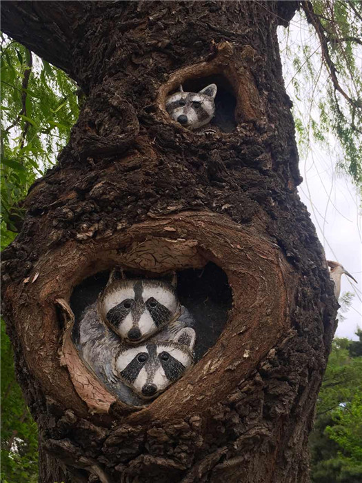 A tree trunk is painted with raccoons in the Zoological and Botanical Garden in Changchun, capital of Northeast China\'s Jilin Province. (Photo/chinadaily.com.cn)