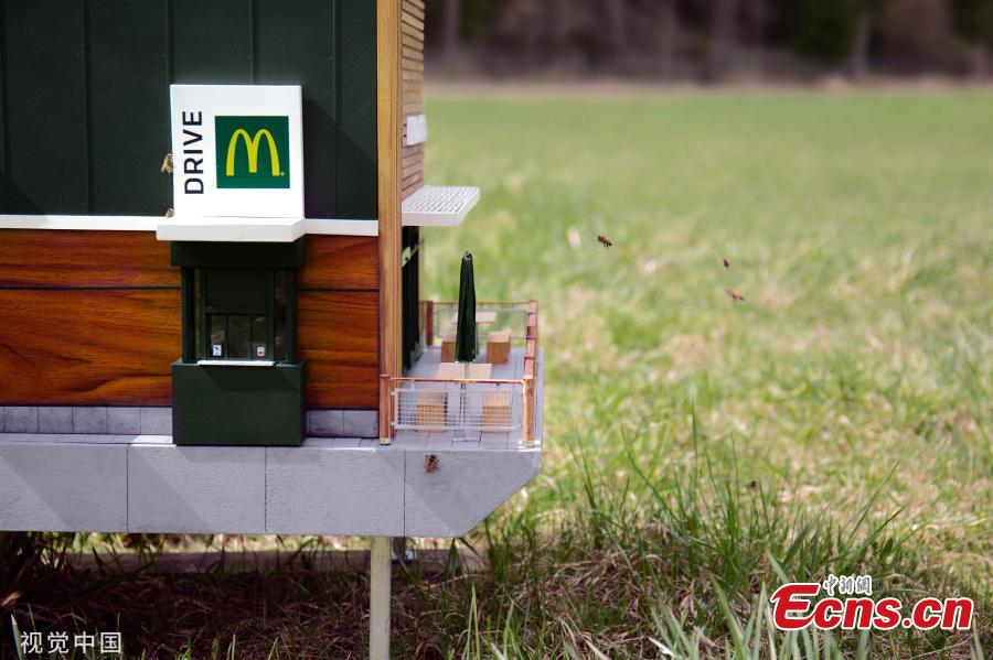 The world's smallest McDonald's has opened its doors in Sweden and it has everyone buzzing — literally. Called the McHive, the tiny McDonald's is not serving burgers and fries to fast-food fans, it's actually a fully functioning beehive for thousands of bees. The McHive features two drive-thru windows, a patio and outdoor seating, sleek wood panelling, and McDonald's advertisements on the windows. (Photo/Agencies)