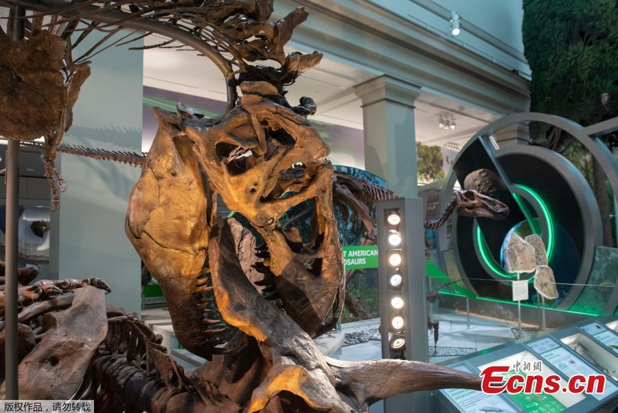 Photo taken on June 4, 2019 shows an exhibit in the new dinosaur and fossil hall of the Smithsonian\'s National Museum of Natural History in Washington D.C., the United States. The Smithsonian\'s National Museum of Natural History will reopen its dinosaur and fossil hall \