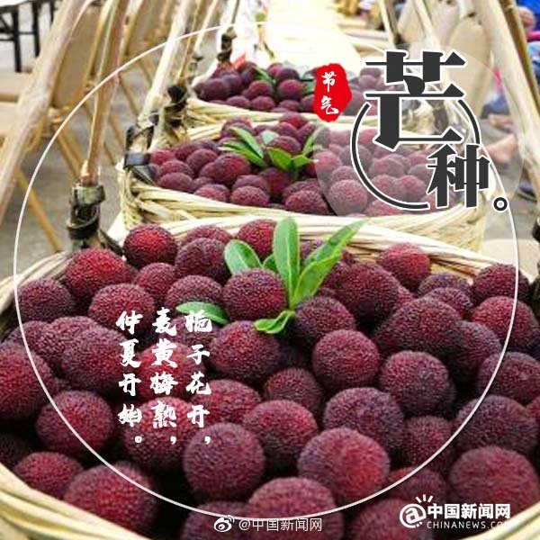 Boil green plums
