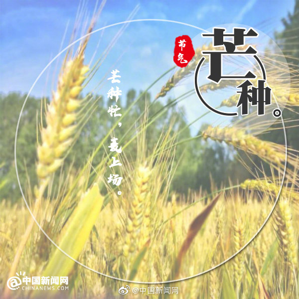 The Chinese lunar calendar divides the year into 24 solar terms. Grain in Ear, (Chinese: 芒种), the 9th solar term, begins on June 6 this year and ends on June 20.