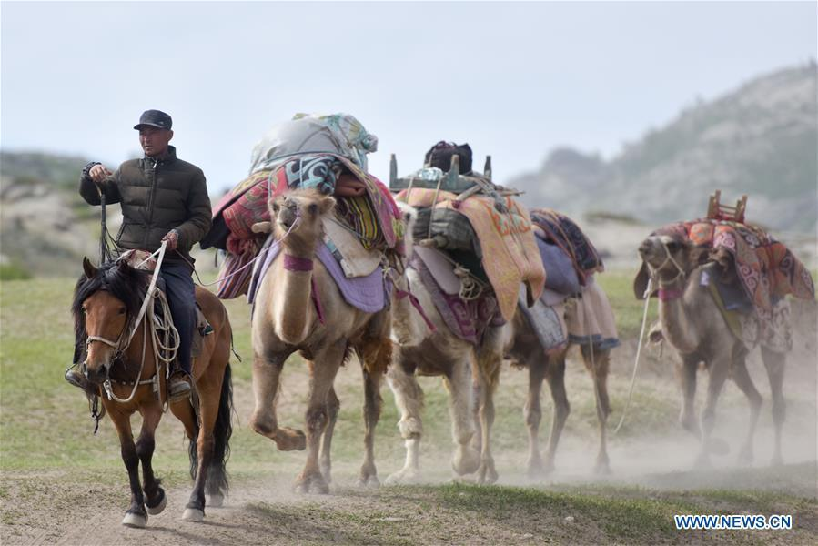 A herdsman leads his camels in a trip to summer pasture in Fuhai County of Altay, northwest China\'s Xinjiang Uygur Autonomous Region, on June 6, 2019. As summer comes, herdsmen of Kazak ethnic group here are busy with transferring livestock to summer pastures. (Xinhua/Ding Lei)