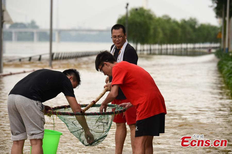 <?php echo strip_tags(addslashes(Residents catch fish on a flooded street near the Liujiang River after heavy rainfall upstream in Liuzhou City, Southwest China's Guangxi Zhuang Autonomous Region, June 10, 2019. (Photo: China News Service/Wang Yizhao))) ?>