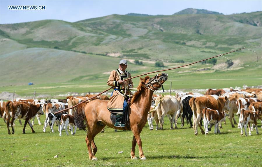 A herdsman herds livestock during the nomadic migration on the Ar Horqin grassland in Chifeng City, north China\'s Inner Mongolia Autonomous Region, May 31, 2019. Yearly nomadic grazing is still a tradition for people live on the Ar Horqin grassland, where was listed of National Important Agricultural Heritage Systems in 2014. For a long time, herdsmen would decide the route and time of yearly nomadic grazing according to the growth of grassland. (Xinhua/Peng Yuan)