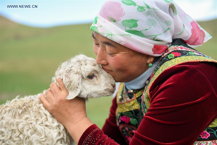 A woman caresses a lamb after arriving the summer camp during the nomadic migration on the Ar Horqin grassland in Chifeng City, north China\'s Inner Mongolia Autonomous Region, June 1, 2019. Yearly nomadic grazing is still a tradition for people live on the Ar Horqin grassland, where was listed of National Important Agricultural Heritage Systems in 2014. For a long time, herdsmen would decide the route and time of yearly nomadic grazing according to the growth of grassland. (Xinhua/Peng Yuan)