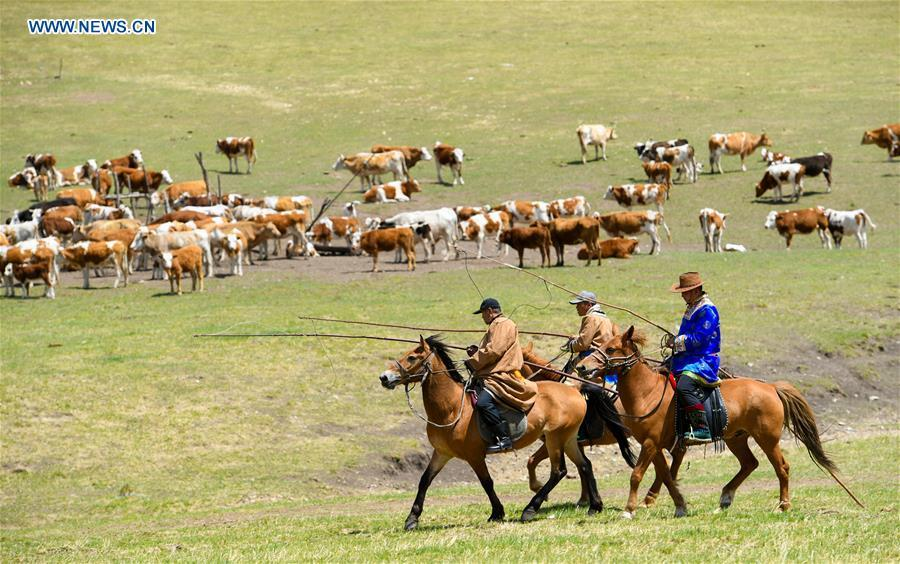 Herdsmen herd livestock during the nomadic migration on the Ar Horqin grassland in Chifeng City, north China\'s Inner Mongolia Autonomous Region, May 31, 2019. Yearly nomadic grazing is still a tradition for people live on the Ar Horqin grassland, where was listed of National Important Agricultural Heritage Systems in 2014. For a long time, herdsmen would decide the route and time of yearly nomadic grazing according to the growth of grassland. (Xinhua/Peng Yuan)
