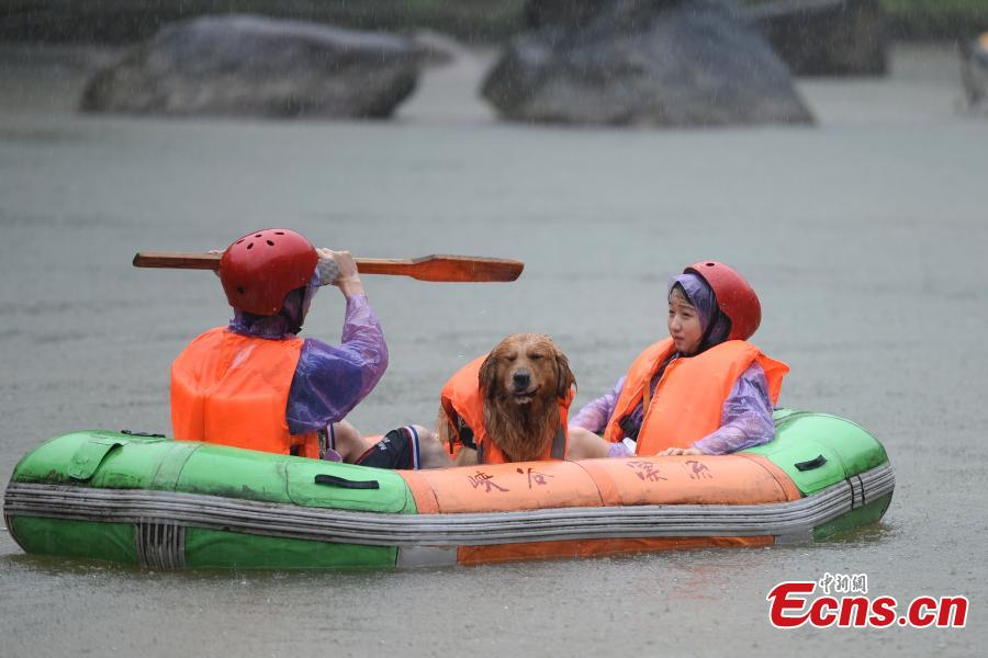A unique rafting competition with entrants competing together with their canine pals is held in a river in Lianyun Mountain in Pingjiang County, Central China's Hunan Province, June 12, 2019. The rafting route stretched for eight kilometers. (Photo: China News Service/Yang Huafeng)