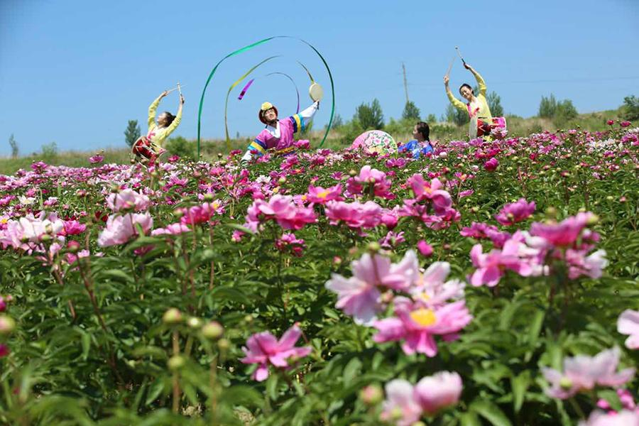 Blooming peonies and Chinese herbaceous peonies are seen in Hunchun city, Northeast China\'s Jilin Province. The sea of flowers dazzles visitors with gorgeous colors in the early summer. (Photo/China Daily)