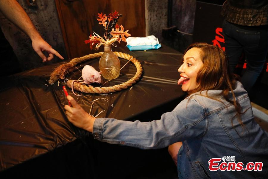 A pop-up Rat Bar in San Francisco offers patrons the chance to hold and play with rats while they drink, June 12, 2019. The animals are clean, domesticated rats, provided by a group specializing in finding homes for small animals and rodents. The bar is charging $49.99 per person for the experience. (Photo: China News Service/Liu Guanguan)