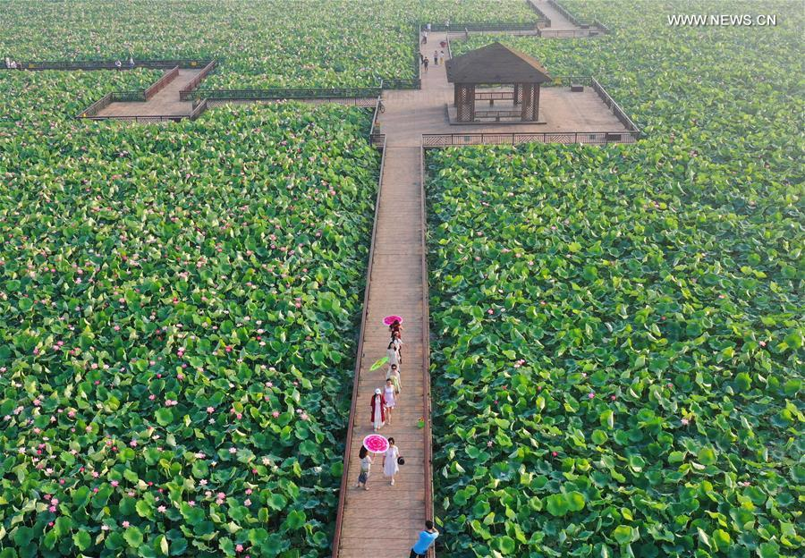 Aerial photo taken on June 15, 2019 shows people watching lotus flowers at Nanhu Park in Hengyang, central China\'s Hunan Province. (Xinhua/Cao Zhengping)