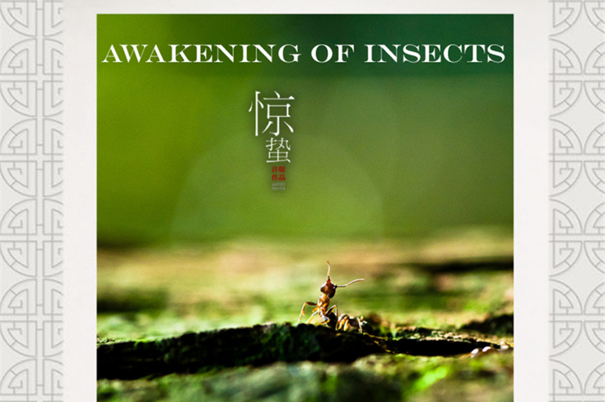 Infographics: Awakening of Insects