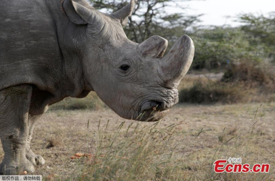 China laments demise of last male northern white rhino
