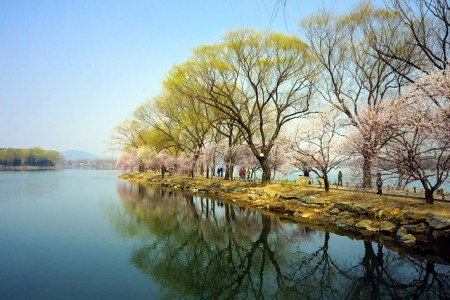 Beijing aims to become over 40 percent green
