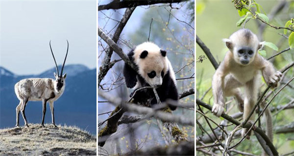 China's national parks: Natural, scenic and wild
