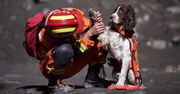 Dogs help search for missing in massive landslide