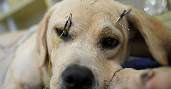 Pet owners turn to acupuncture for cats and dogs