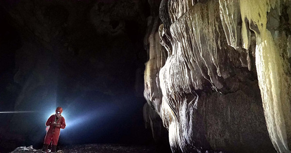 Chinese and French explorers find rare species in Guangxi caves
