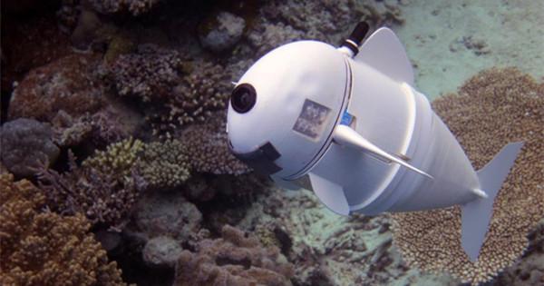 MIT unveils robotic fish