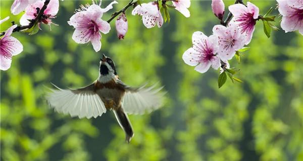 Spring scenery across China