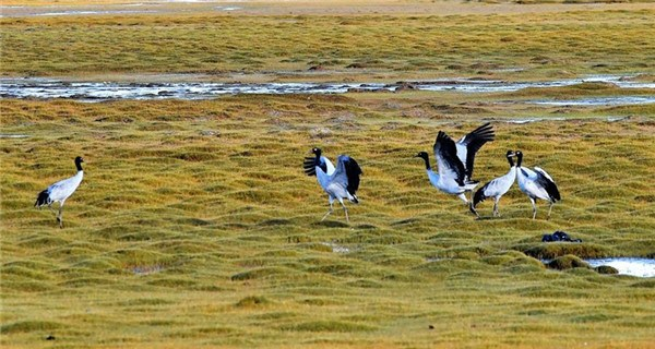 Wildlife paradise: Changtang National Nature Reserve in Tibet