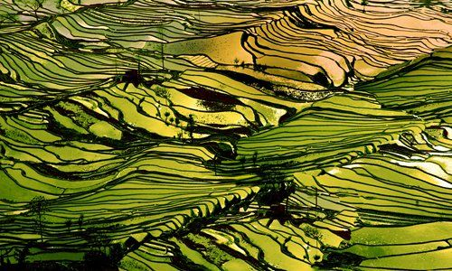 Yuanyang rice terraces �C a carpet waved in Heaven