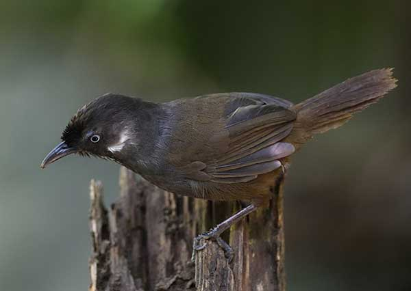 Watchers from home, abroad flock to spot new bird species