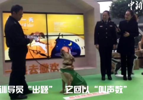Shanghai airport sniffer dog good at maths