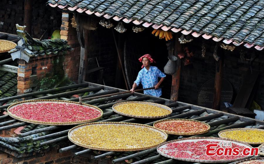 Farmers dry crops for winter storage in Wuyuan county