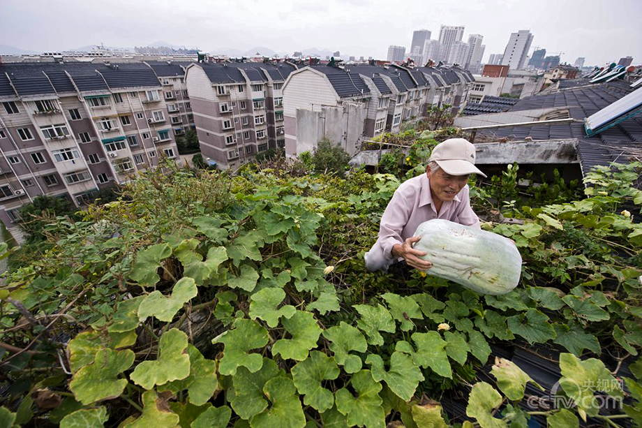 Urban farmers in China