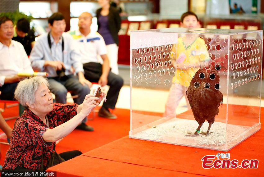 Chicken 'beauty pageant' held in C China city