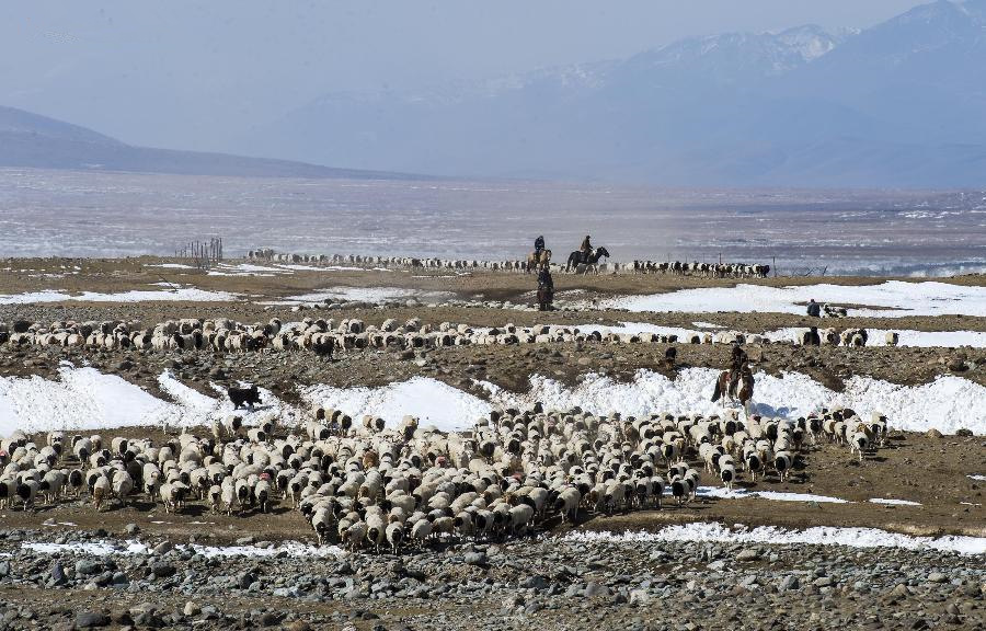 Herdsman families start winter migration in China's Xinjiang