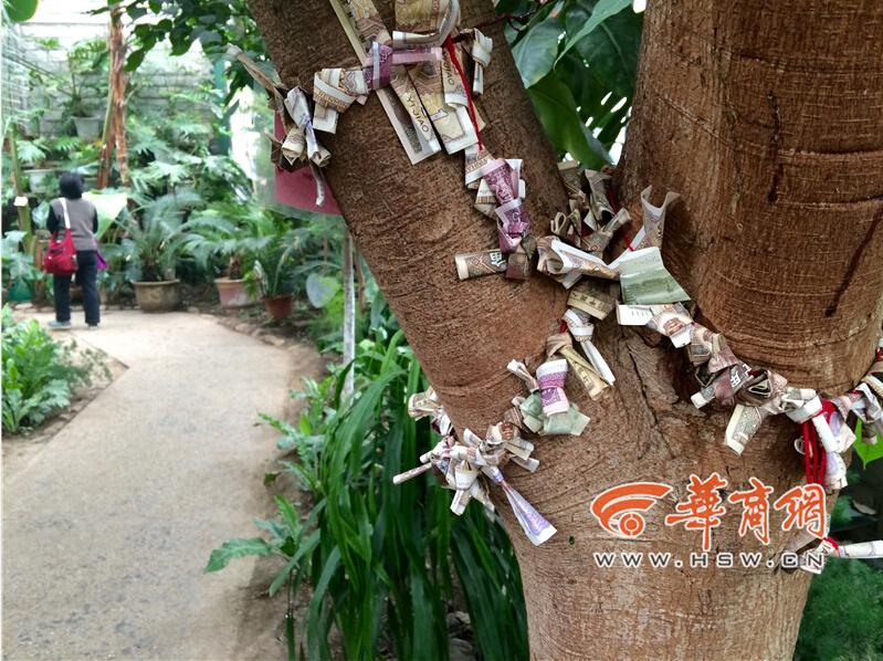 Tree of money: visitors trade cash for luck in botanical garden