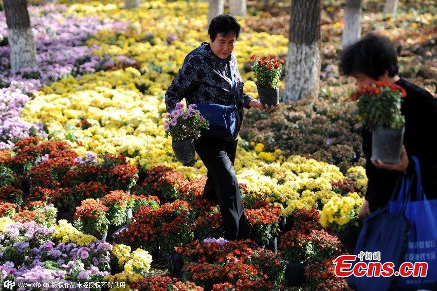Potted-flowers distributed for free in Xinjiang city