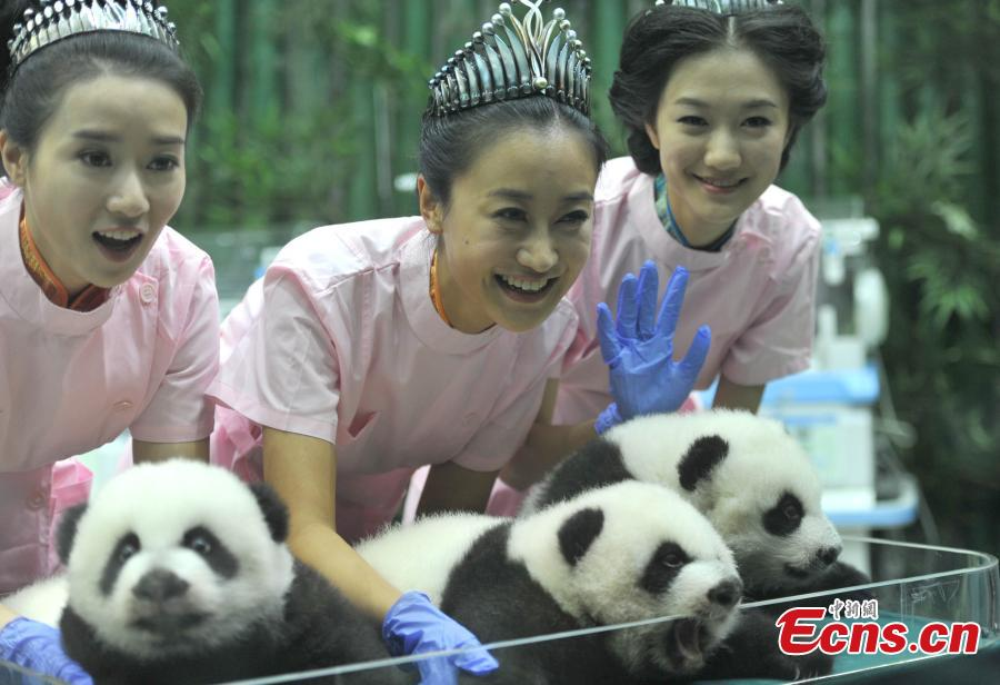 Beauty chefs make cakes for pandas