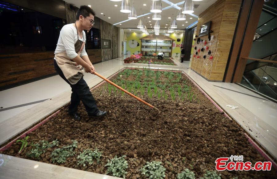 Shopping mall develops farmland to promote green lifestyle