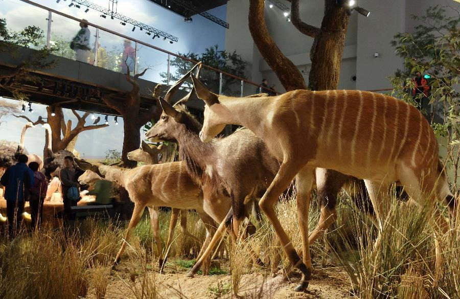 Wild animal specimens exhibited in Shandong Museum