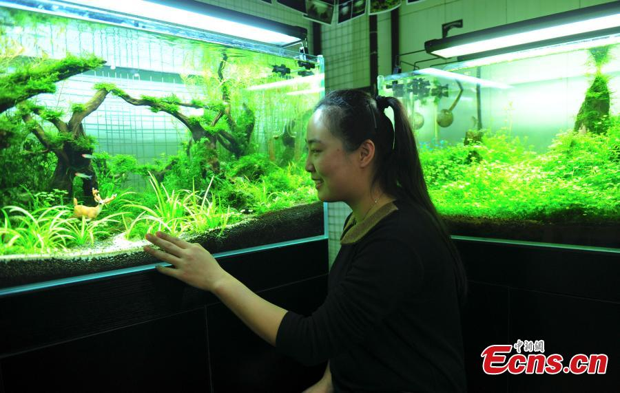 'Forest' in tank helps indoor environment
