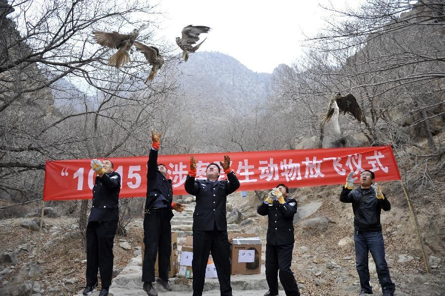 Trafficked animals released in Yinchuan