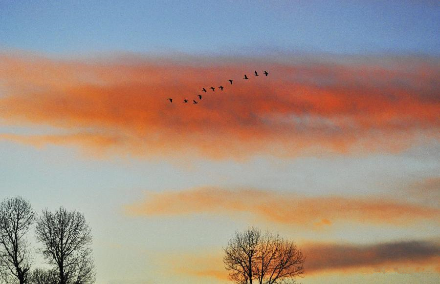 Scenery of Lhasa: geese and sunset glow