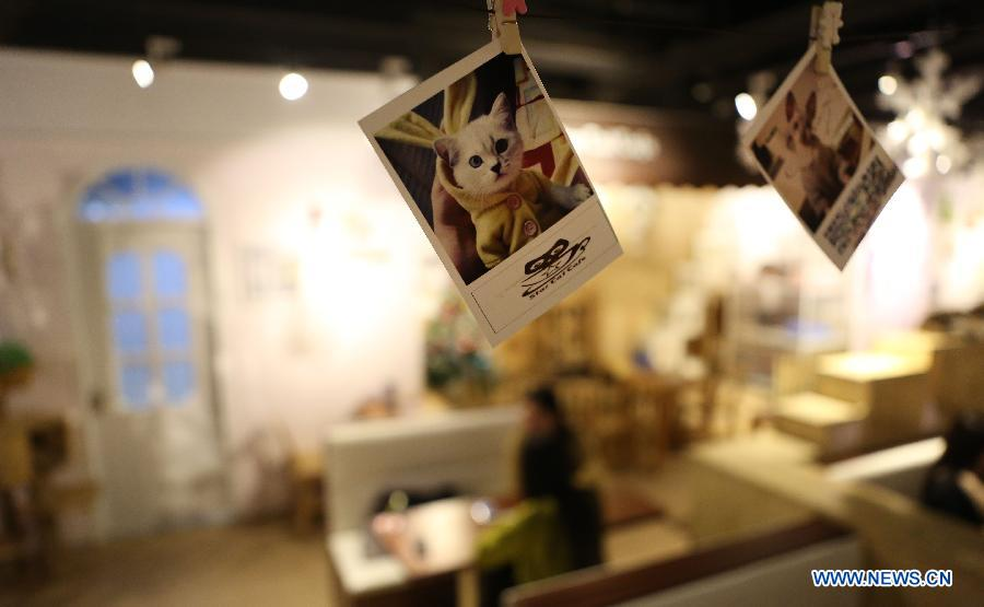 Cat-themed cafe in NE China's Liaoning province