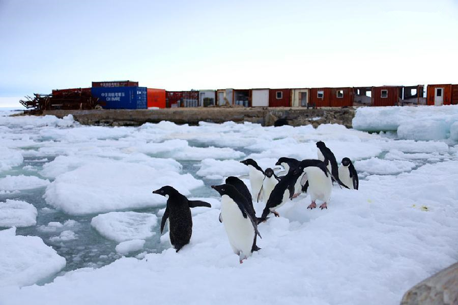 Summer scenery of Zhongshan Antarctic Station
