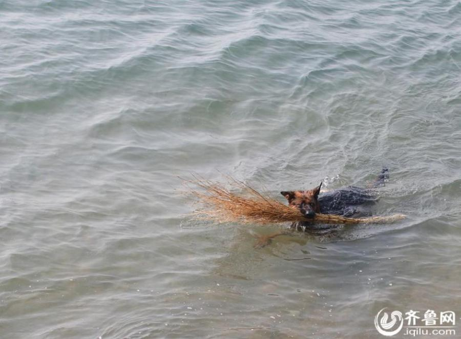 'Nature friendly' dog enjoys collecting sea trash
